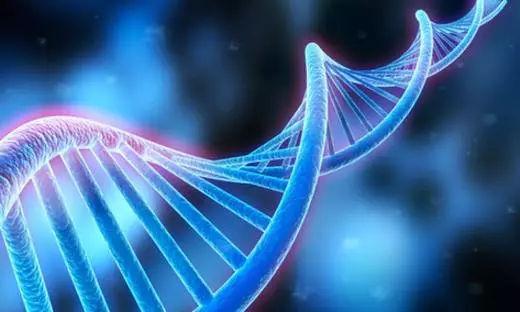你认为孩子的遗传基因是完全来自父母吗?