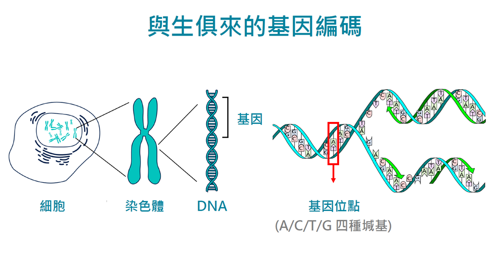 天赋基因检测